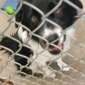 Lake County Humane Society - Mentor, OH. CHASE:  SURRENDER PAPERS SIGNED UNDER DURESS AND THREAT ARE NULL AND VOID!!!