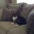Precious Paws Pet Sitting