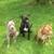 JLC Animal Sitting Services