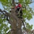 B and M Tree Service