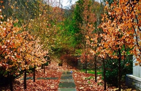 Get Your Home Ready for Fall in Nashville
