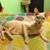 ZOE'S PROFESSIONAL ANIMAL CARE/SITTER SERVICE