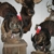 Broderick Head's Taxidermy