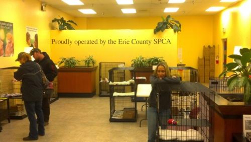 County Spca Erie - Buffalo, NY
