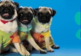 Soapy Dogs mobile pet grooming - Littleton, CO