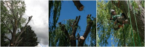 tree arborists