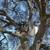 Arapahoe Tree Svc