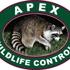 Apex Wildlife Control LLC