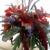 Ecfloro Sustainable Floral Design