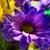 Angelone's Florist | Fresh Flowers - Guaranteed