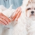 Michelle's Pampered Pets