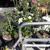 Bent Oak Nursery, Punta Gorda Plants.Com