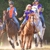 BCM Morring Farm- Horse Boarding and Riding Lessons