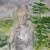 Christine Joyce LMT, CH