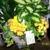 Barkers Florist
