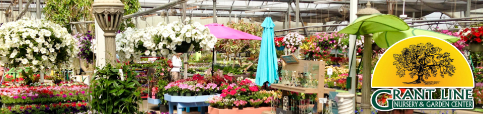 Plant Nursery in New Albany