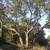 Top To Bottom Tree Care & Stump Grinding