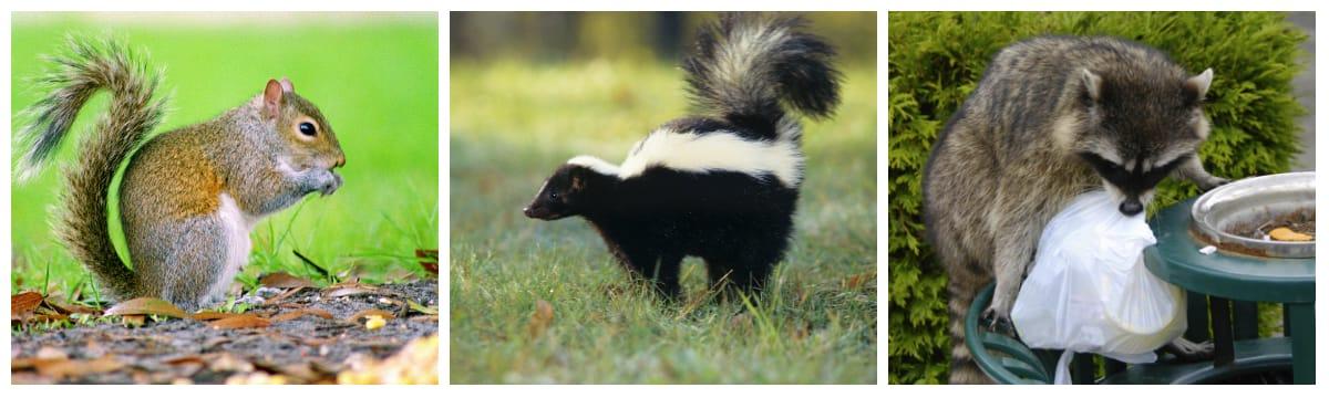 Wildlife Animal Removal