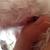 All Paws Mobile Dog Grooming & Spool