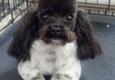 Soggy Doggy Grooming - Vinita, OK