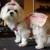 Dog Daze Canine Hair Design