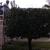 Seminole Tree Service