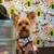 Aaron & Alvin's Dog Grooming