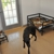 Country Cottage Pet Resort