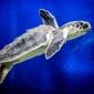 Audubon Aquarium of the Americas - New Orleans, LA