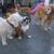 Central Bark Doggie Day Care