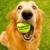 DogWatch® Hidden Fence of the Triad