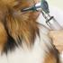 Eastex Veterinary Clinic