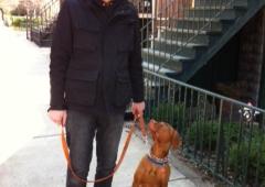 Super Dog Walking - Chicago, IL