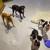 24 Hour Dog Daycare