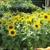 Dee's Nursery & Florist Inc
