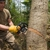 Forrest Tree Service Inc
