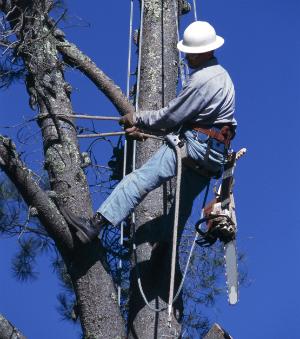 petaluma tree service