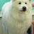 Need-Us Bark-Us Dog Grooming Salon & Spa