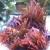 Fish R U S