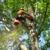 S.A.C. Tree Service