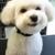 Kiss the Dog Mobile Grooming Salon