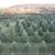 Brush Creek Evergreens