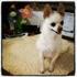 Pet Lodge Pet Resort