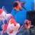 Balanced Aquarium