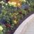 Garden City Nursery