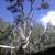J Davis Tree Service