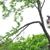 Tree Of Life Tree Management Service