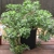 Tanque Verde Greenhouses