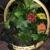 Kathy's 2nd Chance Plants, LLC