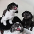 Trim Time Pet Grooming